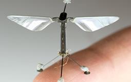 insectos roboticos