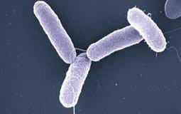 resistencia antimicrobianos